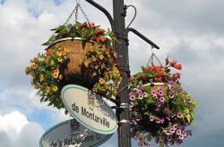 paniers suspendus fleurs centre-ville