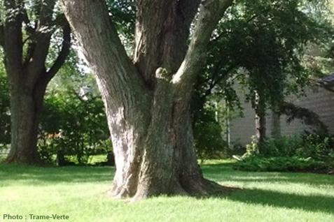 Politique de l'arbre